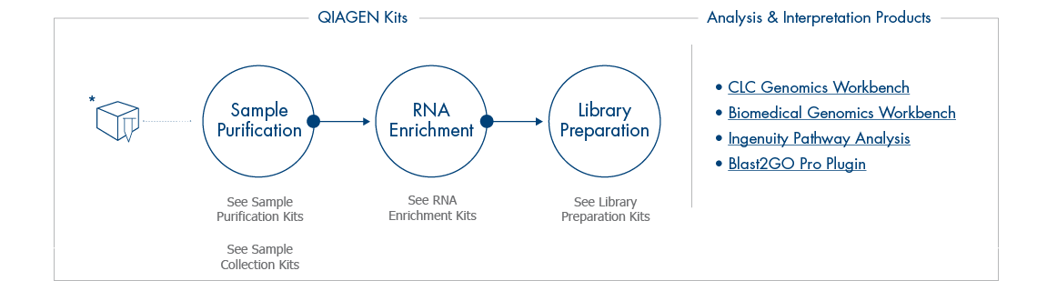 RNASeq_workflow_bottom