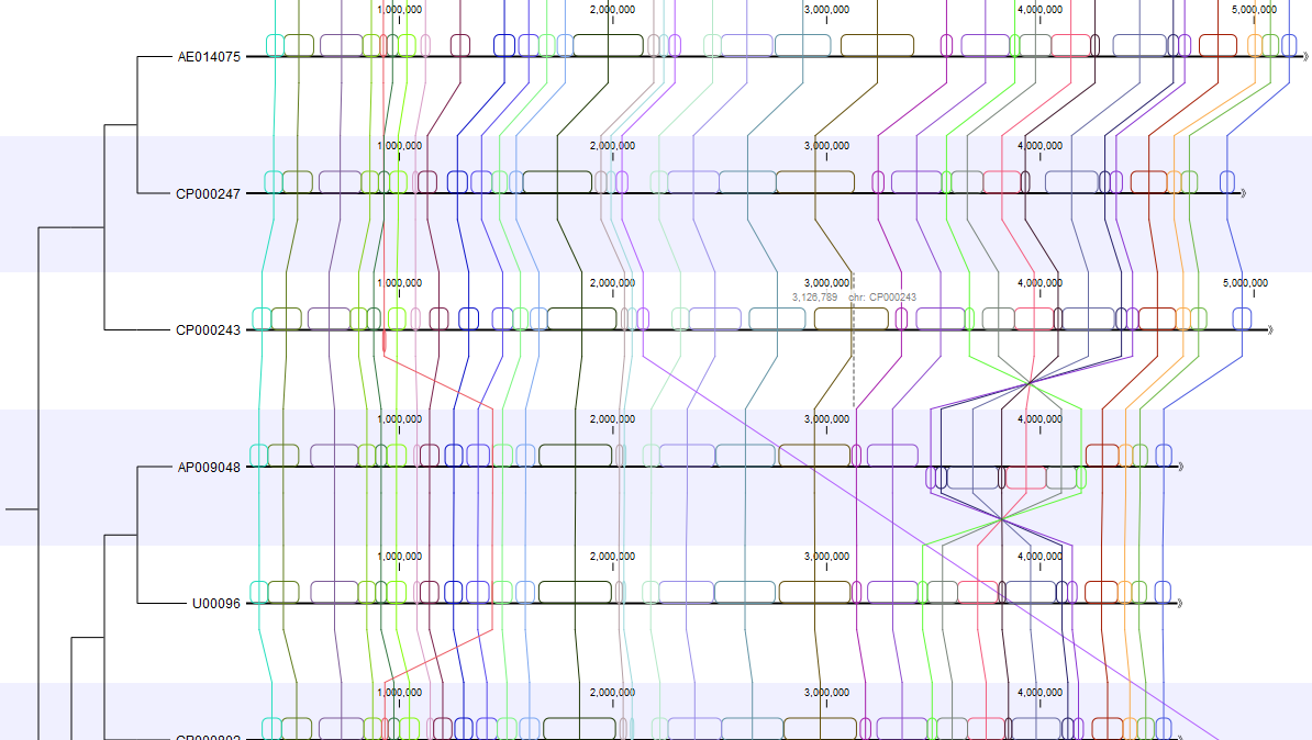Comparative Analysis of Whole Genomes using CLC Workbenches